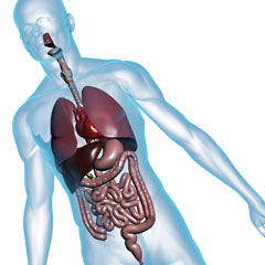 You'll learn about the digestive system in your medical assisting classes