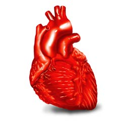 You'll learn about the heart and lungs in your medical assisting classes
