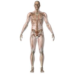You should be familiar with anatomy and medical terminology to pass your medical transcription certification test